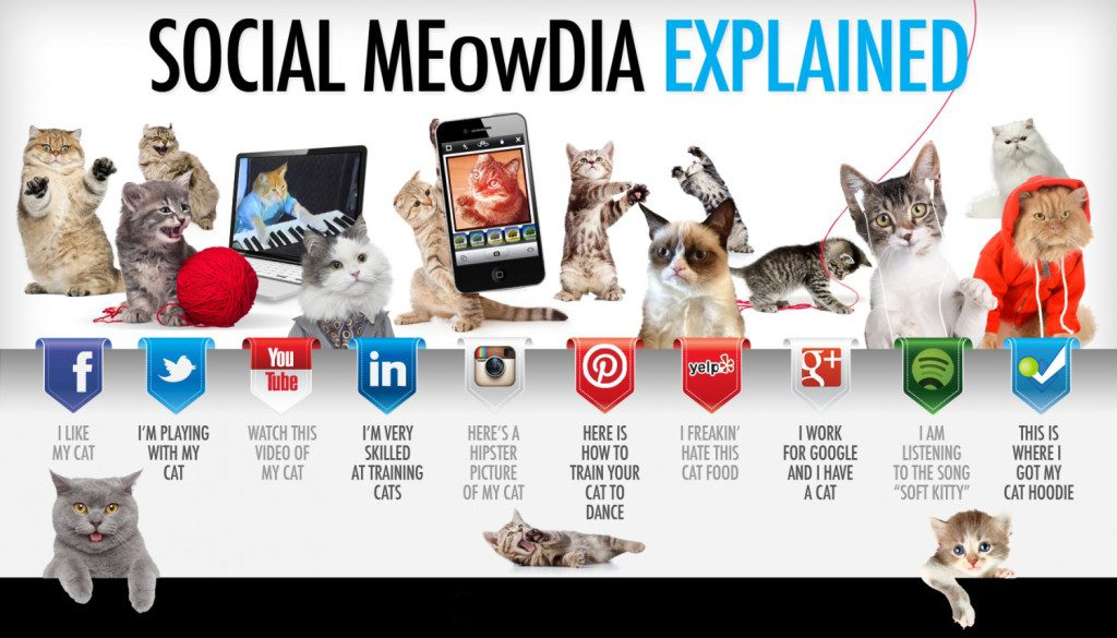 social-media-explained-by-cute-cats_5127ca6880db9_w1500.png